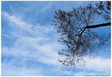 Tree Against a Blue Sky Prints