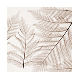 Ferns I Giclee Print by Steven N. Meyers