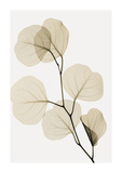 Eucalyptus Leaves Giclee Print by Steven N. Meyers