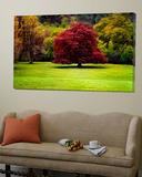 The Red Tree Plakater av Jody Miller