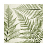 Ferns III Giclee Print by Steven N. Meyers