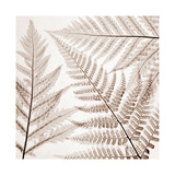 Ferns III Reproduction procédé giclée par Steven N. Meyers