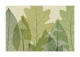 Sei foglie Stampa giclée di Steven N. Meyers