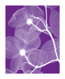 Flor de cornejo Lámina giclée por Steven N. Meyers