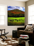 Vermont Cows Prints by Jody Miller
