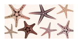 Starfish Collection (Sepia) Giclee Print by Steven N. Meyers