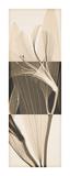 Peruvian Lily II Giclée-tryk af Steven N. Meyers