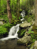 Scenic View of a Smoky Mountains Waterfall and Forest Photographic Print by Darlyne A. Murawski