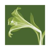 Lilies B (Negative) Giclee Print by Steven N. Meyers