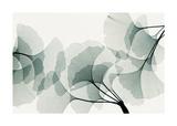 Steven N. Meyers - Gingko Dance Digitálně vytištěná reprodukce
