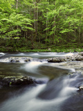 Scenic View of the Rushing Little River and Forest in Springtime Photographic Print by Darlyne A. Murawski