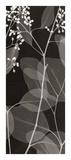 Eucalyptus V Giclee Print by Steven N. Meyers