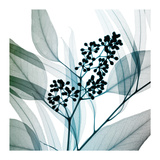 Eukalyptus Giclée-tryk af Steven N. Meyers