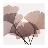 Steven N. Meyers - Gingko Leaves I Digitálně vytištěná reprodukce