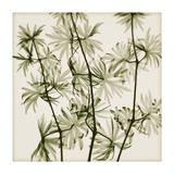 Wild Geranium Giclee Print by Steven N. Meyers