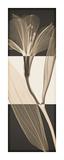 Peruvian Lily I Giclée-trykk av Steven N. Meyers
