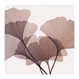 Gingko Leaves I Giclee Print by Steven N. Meyers