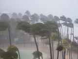 Palm Trees in the Wind and Rain as Hurricane Irene Makes Landfall Photographic Print by Mike Theiss