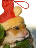 A Hamster with a Red Hat Photographic Print by Mauricio Handler