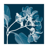 Hydrangeas A (Negative) Giclee Print by Steven N. Meyers