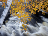 A White Birch Tree Hangs over Cascade at an Outlet of Horseshoe Lake Photographic Print by Michael Melford