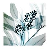 Eucalyptus Giclee Print by Steven N. Meyers