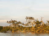 Bird Island in the Everglades National Park Photographic Print by Mauricio Handler