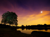 Richmond Park Tree at Night by Pen Ponds Photographic Print by Alex Saberi