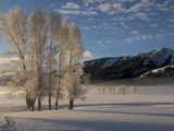 All Trees are Covered in Hoar Frost on This Freezing Morning, Photographic Print by Barrett Hedges
