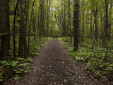 A Trail Through the Forest at the Adirondack Interpretive Center Photographic Print by Michael Melford