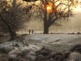 A Couple Walk in the Winter in Richmond Park Photographic Print by Alex Saberi