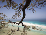 A Frankincense Tree Anchors Itself on the Cliffs Photographic Print by Michael Melford