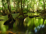 View of the Stream and Forest Just Above the Khlong Lan Waterfall Photographic Print by Darlyne A. Murawski