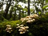 Fungi Growth Near the Adirondack Interpretive Center Photographic Print by Michael Melford