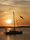A Silhouetted Sailboat at Sunset and Flying Brown Pelican Photographic Print by Marc Moritsch