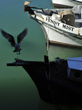 Seagulls and Fishing Boats in Fisherman's Wharf Photographic Print by Raul Touzon