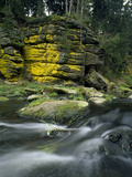 Sulfur Lichens Growing on Rocks in the Eger River Valley Photographic Print by Norbert Rosing