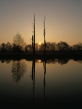 Reflections in a Pond at Sunset in the Oder River Wetlands Photographic Print by Norbert Rosing