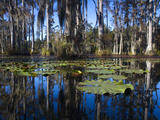 Lily Pads Float on the Water's Surface in Cypress Gardens Photographic Print by Michael Melford