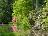 A Springtime View of Plants Blooming Along the Side of a Pond Photographic Print by Darlyne A. Murawski