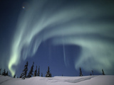 The Aurora Borealis over a Snowy Landscape with Evergreen Trees Photographic Print by Norbert Rosing