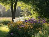 Summer Flower Adourn a Farm Garden Fotografisk tryk af Kenneth Ginn