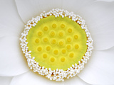 The Complex and Elegant Inner Workings of a White Lotus Fotoprint van Stephanie Lane