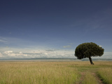 A Lone Euphorbia Tree in a Vast Grassland Photographic Print by Beverly Joubert
