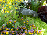 A Mixed Species Garden Patch with Pansies, Lettuce and Other Plants Photographic Print by Darlyne A. Murawski