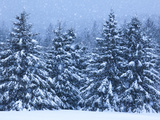 Snow Covered Trees in the High Peaks Region of Adirondack Park Photographic Print by Michael Melford