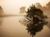 A Grey Heron, Ardea Cinerea, Waits to Catch Fish on Pen Ponds Photographic Print by Alex Saberi