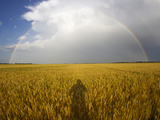 A Man's Shadow on a Wheat Field with a Rainbow Behind a Passing Storm Photographic Print by Mike Theiss