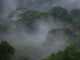 Morning Mist in the Rain Forest Canopy of Borneo Photographic Print by Tim Laman