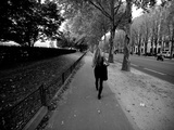 A Woman Walks in a Tree Lined Street in Paris Impresso fotogrfica por Jorge Fajl